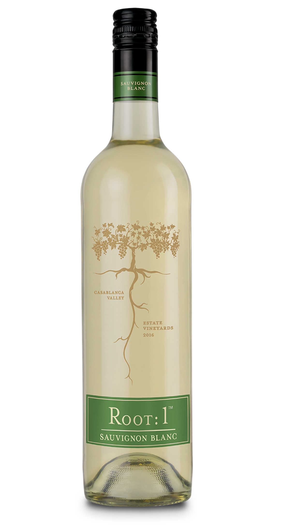 Root: 1 Sauvignon Blanc - Chilean wine